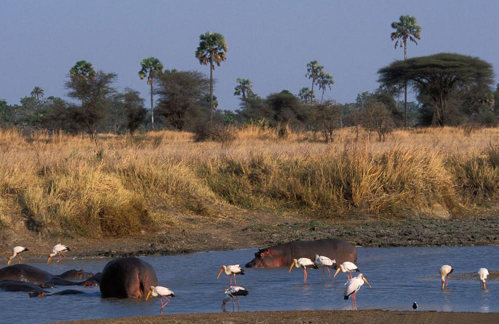 7 Days Safari to Manyara, Tarangire, Serengeti and Ngorongoro